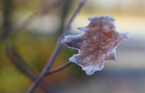 013 Frost.jpg