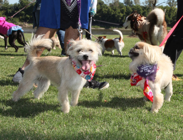 007 Strut Your Mutt 2013.jpg