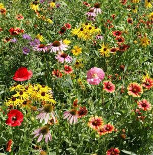 Shaw Wildflower Market Is Sept. 5