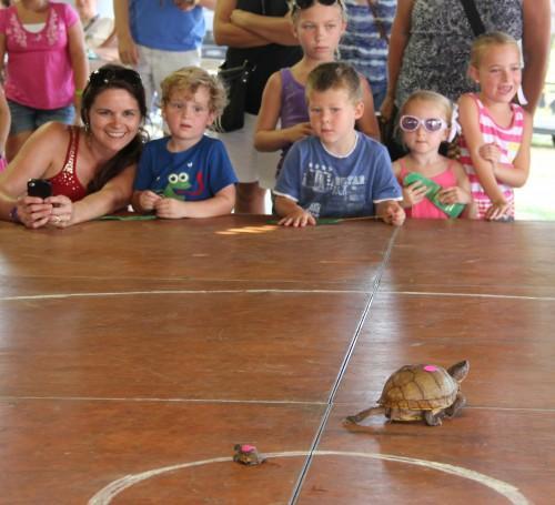 001 Turtle.jpg
