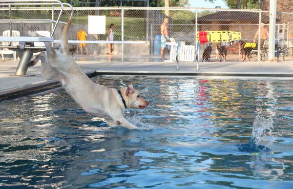 012 Doggie Dip 2013.jpg