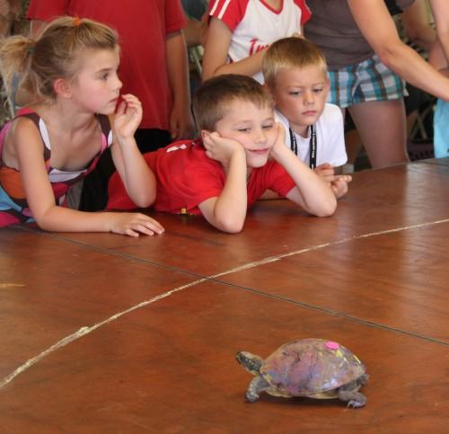 002 Turtle.jpg