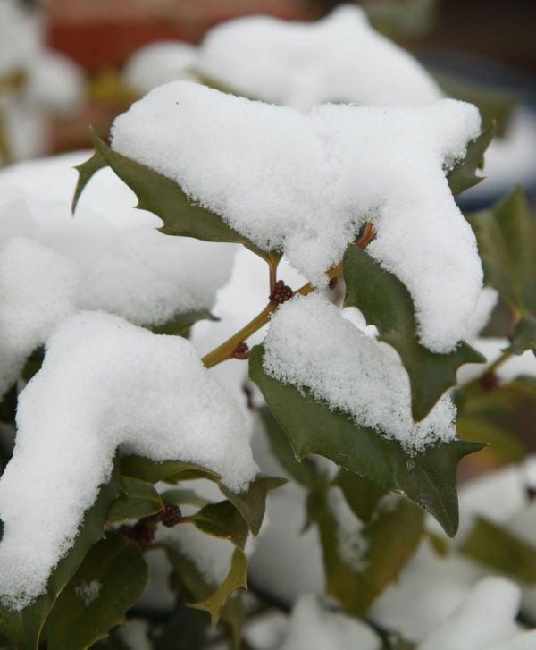 025 Snow Jan 2 2014.jpg