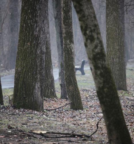 011 winter trail.jpg