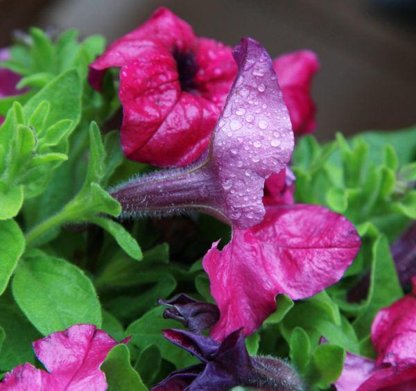 023 Early Summer Blooms 2014.jpg