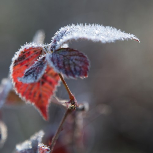 009 Frost.jpg