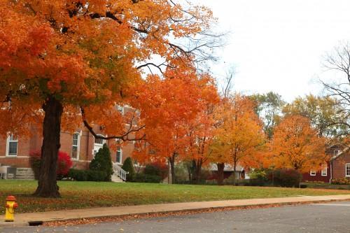 014 Fall trees.jpg