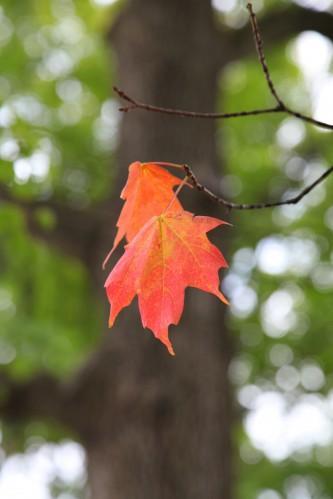 018 Fall trees.jpg