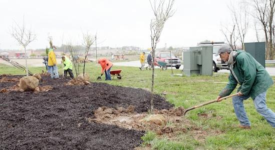 Planting Trees at Phoenix Park