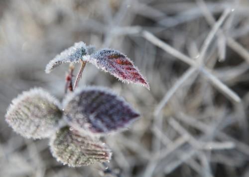 008 Frost.jpg