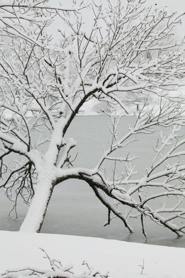 014 Snow December 14 2013.jpg