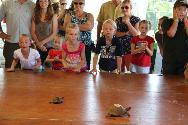 016 Turtle race 2013.jpg