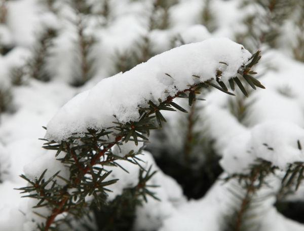 023 Snow Jan 2 2014.jpg