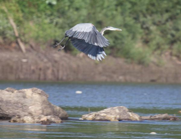 007 Scenes from the River Aug 2013.jpg