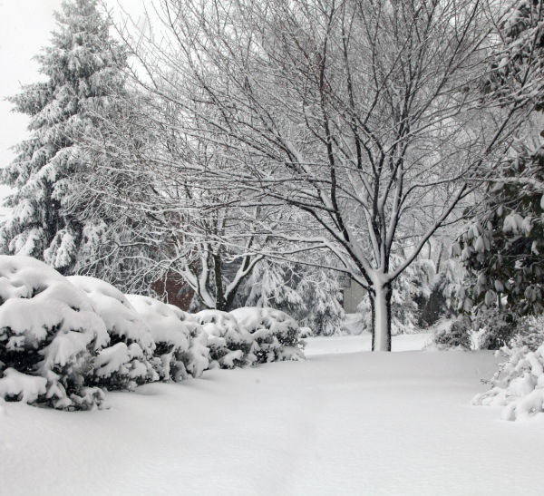 016 March Snow.jpg