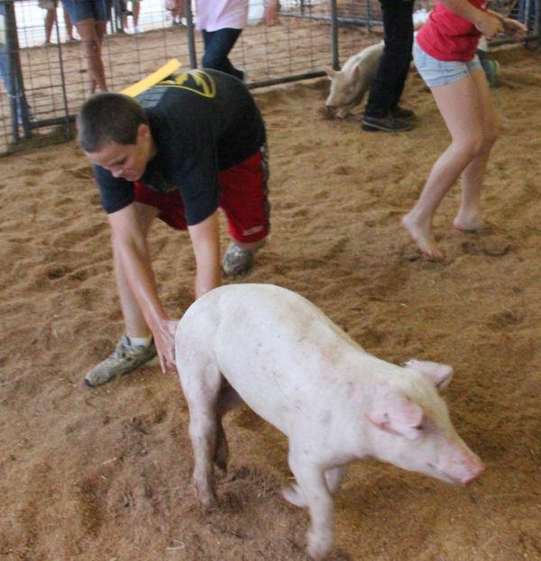 038 Pig Chase 2013.jpg