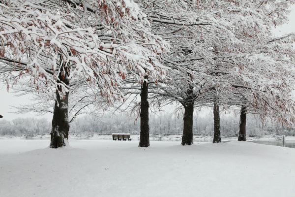 034 Snow December 14 2013.jpg