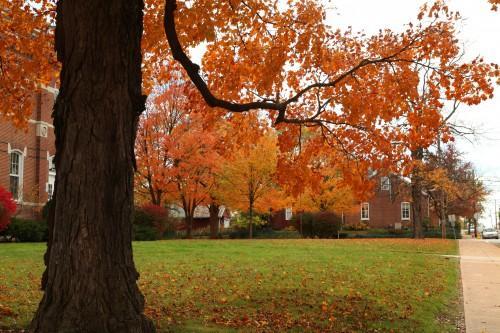 011 Fall trees.jpg
