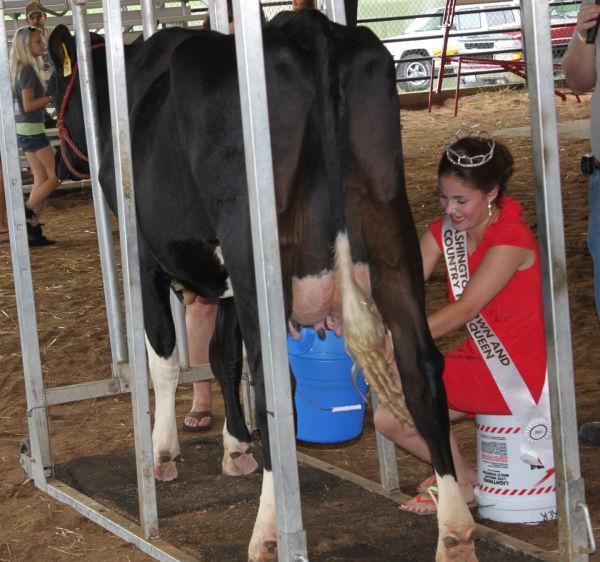 009 Milking Contest 2013.jpg