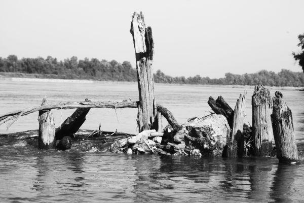 015 Scenes from the River Aug 2013.jpg