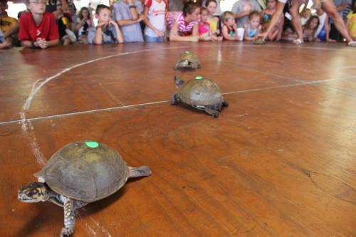008 Turtle.jpg