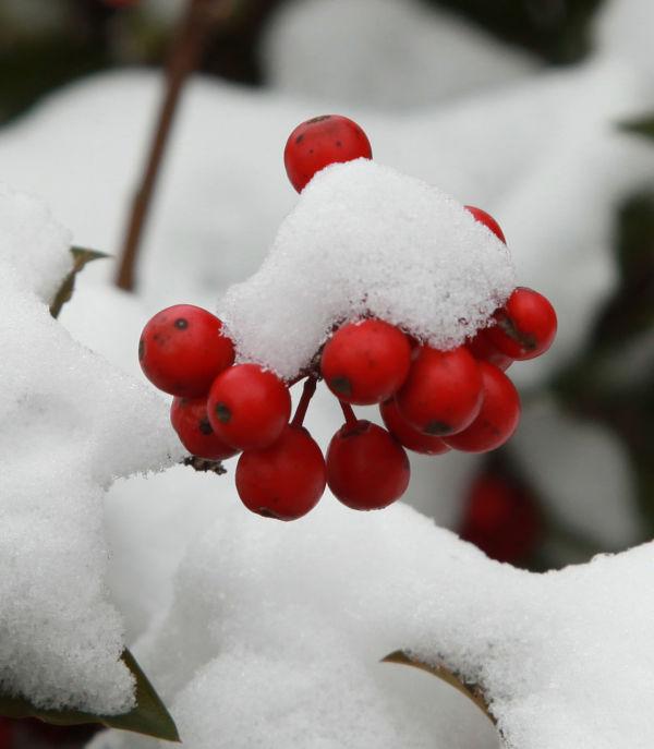 020 Snow Jan 2 2014.jpg