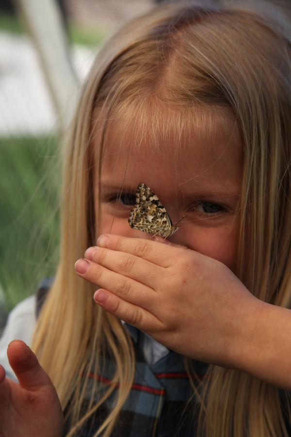 004 oll butterflies.jpg