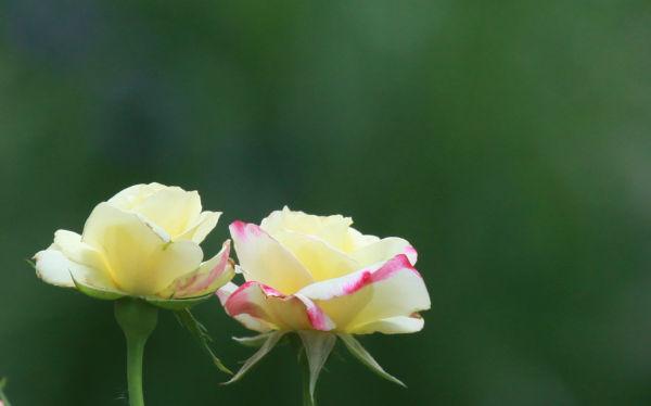 005 Early Summer Blooms 2014.jpg