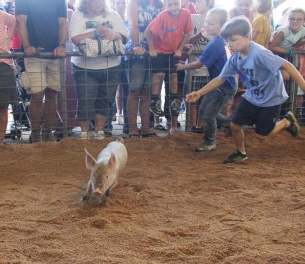 010 Fair Pig Chase 2014.jpg