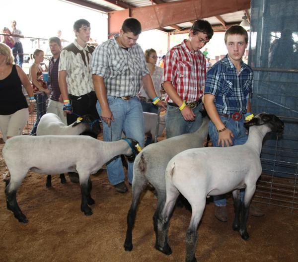027 Fair Livestock.jpg