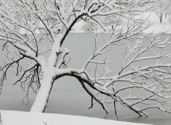 013 Snow December 14 2013.jpg