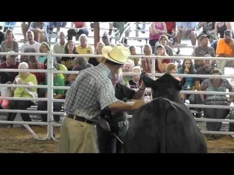 Steer Show at Washington Town and Country fair 2014