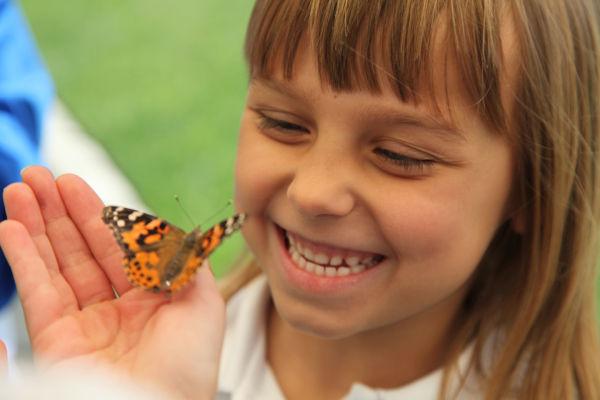 007 oll butterflies.jpg