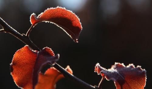 022 Frost.jpg