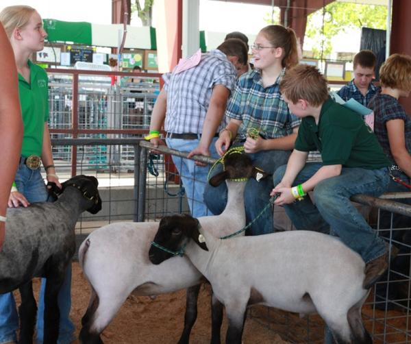 039 Fair Livestock.jpg