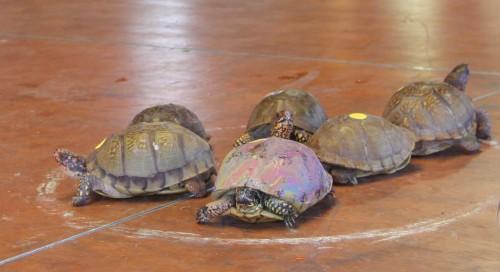 012 Turtle.jpg