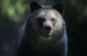 Bear attacks woman running marathon in New Mexico
