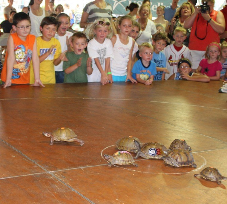 016 Fair Turtle Race.jpg