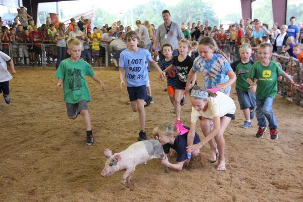 023 Pig Chase 2013.jpg