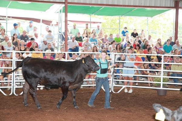 019 Fair Livestock.jpg