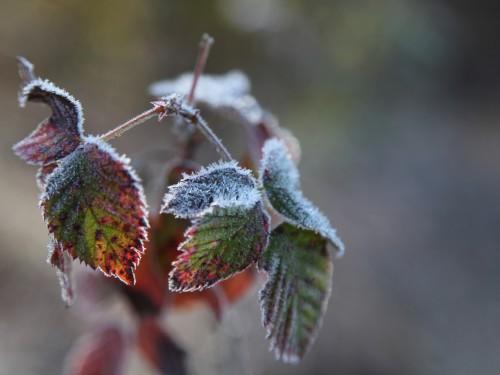 005 Frost.jpg