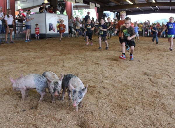 006 Pig Chase 2013.jpg