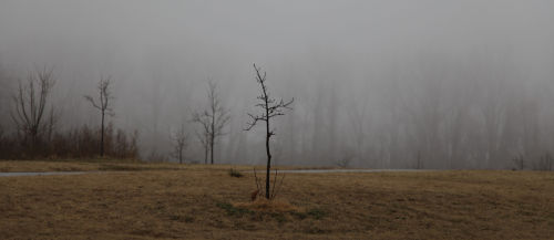 Foggy Washmo 012.jpg