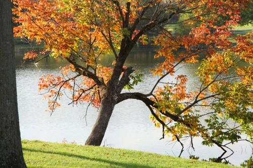 021 Fall trees.jpg