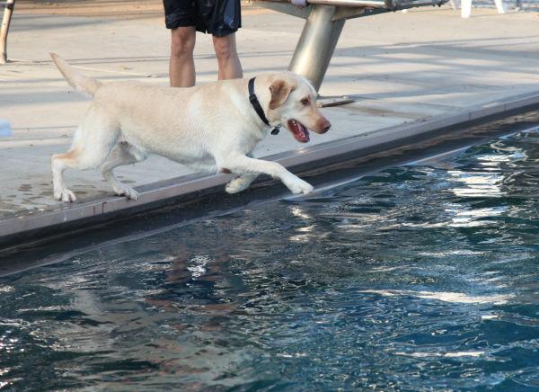 014 Doggie Dip 2013.jpg