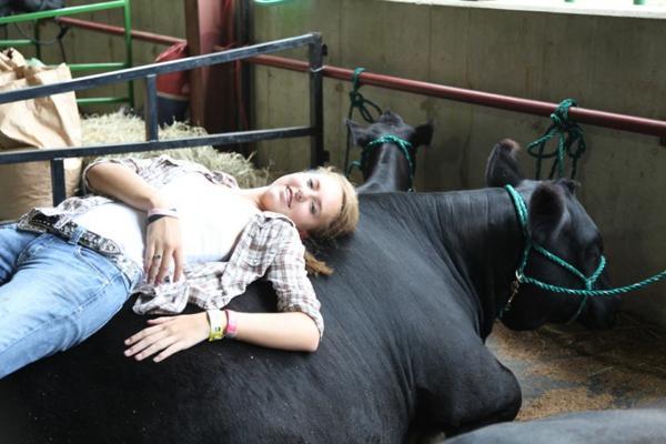 025 Fair Livestock.jpg