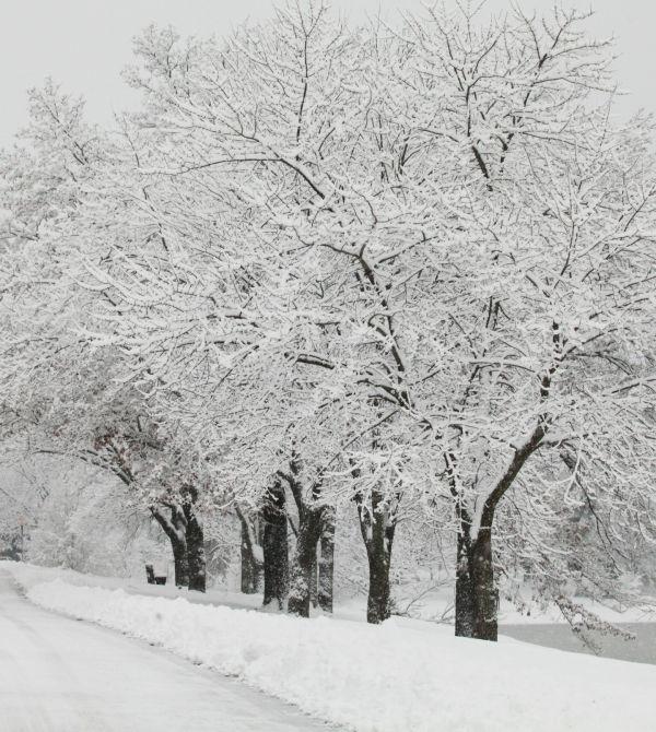 010 Snow December 14 2013.jpg