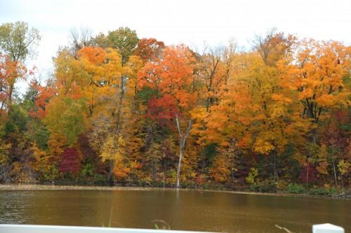 008 Fall trees.jpg