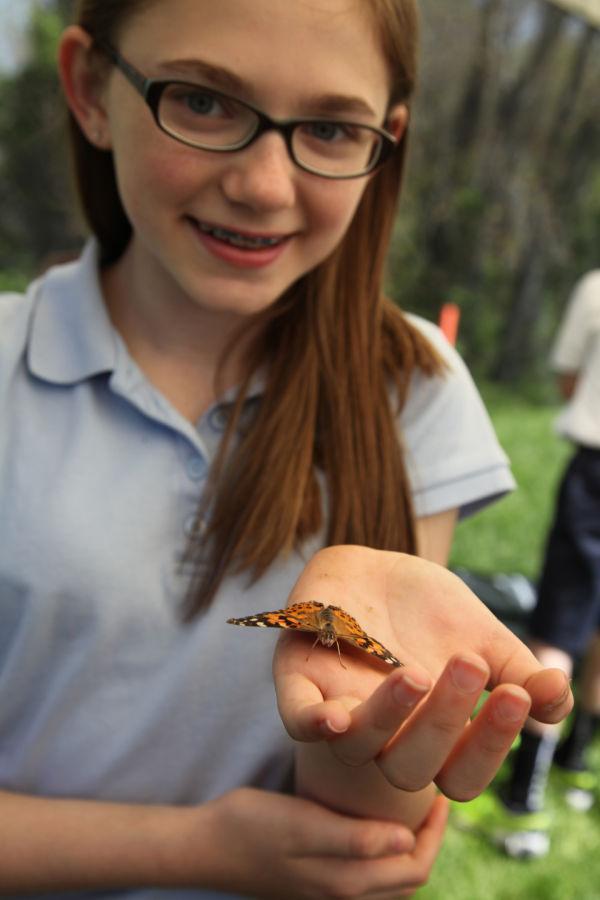 021 oll butterflies.jpg