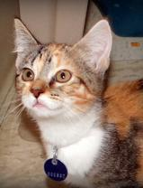 Adult Cat Special at Humane Society Shelter